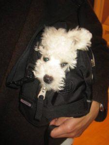 obi inside the bag