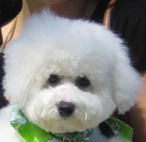 obi handsome