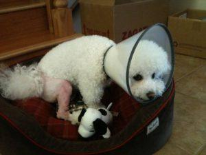 obi bandage out