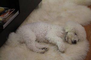 tired obi