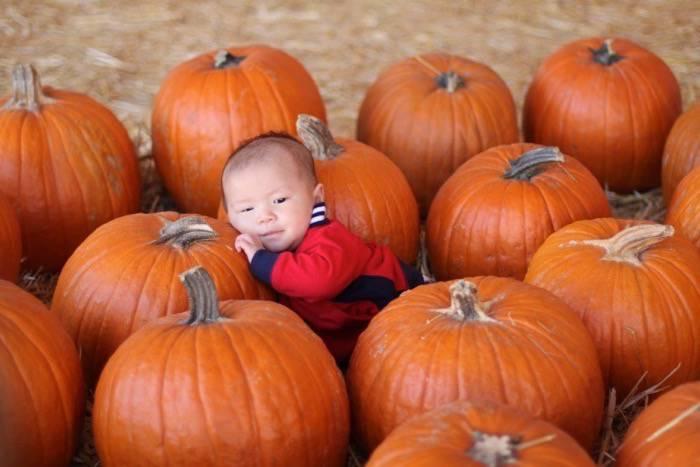 ethan likes pumpkin